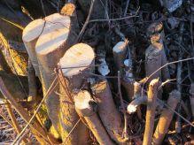 tree-stump-278610__480